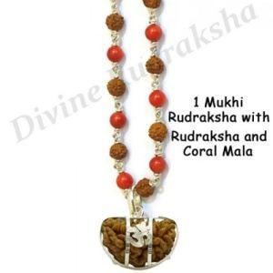 1 Mukhi Rudraksha with Rudraksha Coral Mala