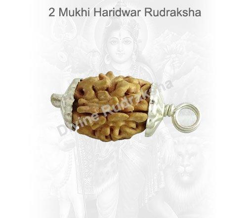 Two (2) Mukhi Rudraksha - Indian
