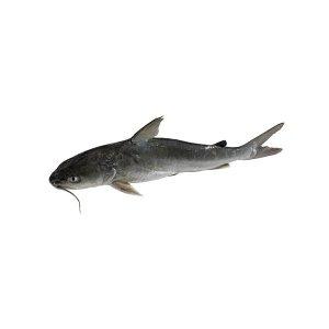 Cat Fish - 500g