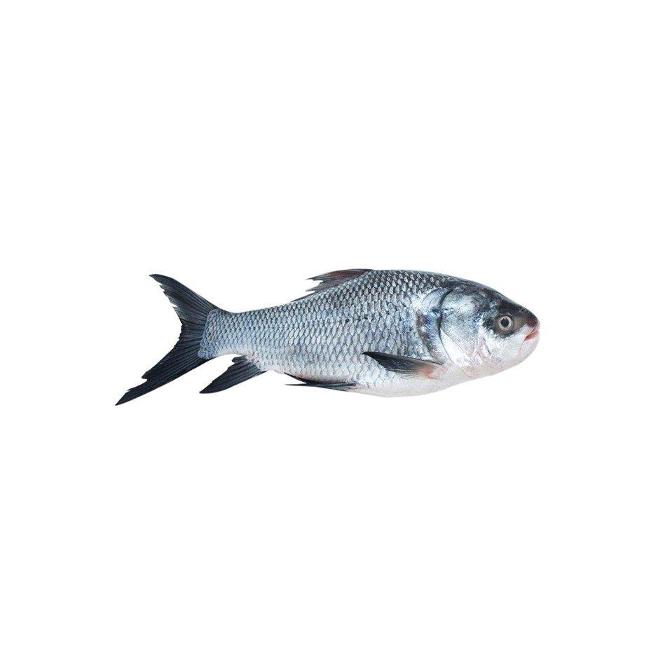 Katla Fish 500g