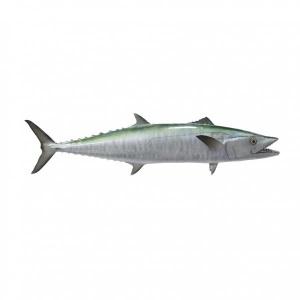 King Fish - 500g