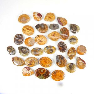 30 Pcs Ammonite Fossil Mix Shape Free Form Cabochon 52.00 Gms