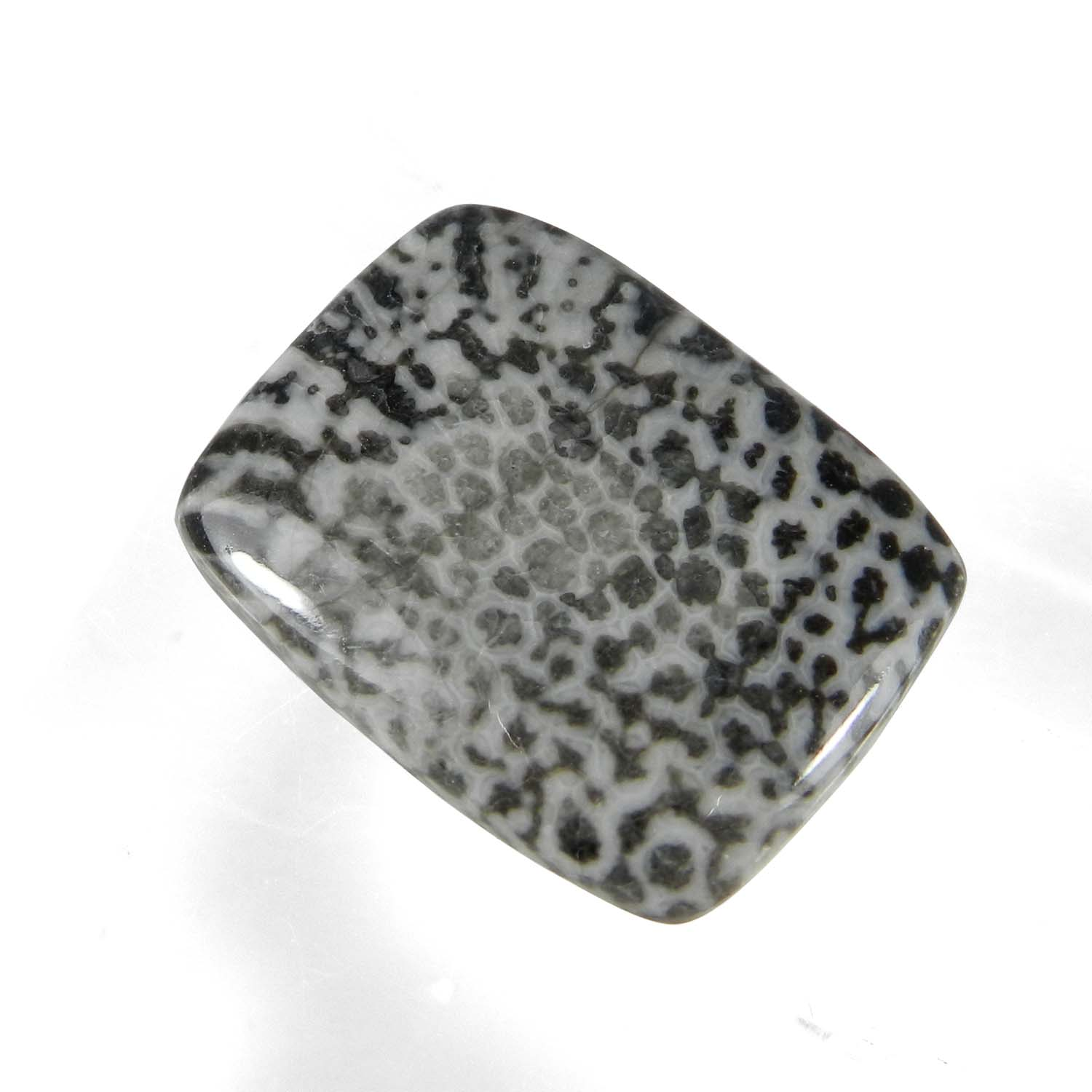 Black Coral 22x17mm Rectangle Cabochon 17.35 Cts