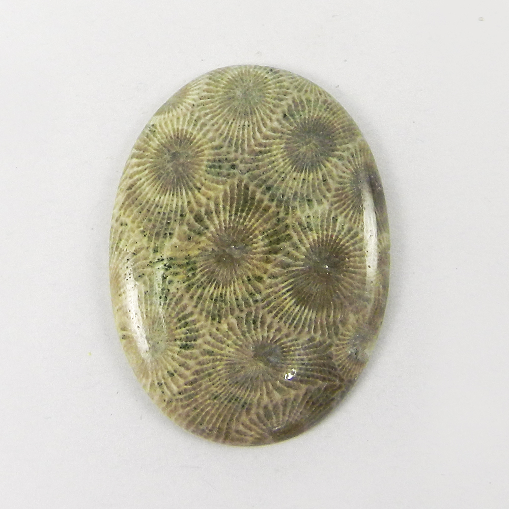 Black Fossil Coral 38x28mm Oval Cabochon 36.1 Cts