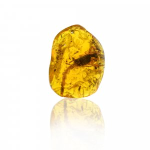 Insect Synthetic Amber 47x37mm Uneven Tumble With Drilled Stone 93.70 Cts