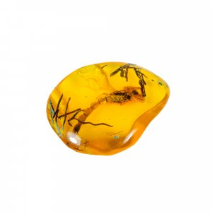 Insect Synthetic Amber 49x37mm Uneven Tumble With Drilled Stone 75.60 Cts