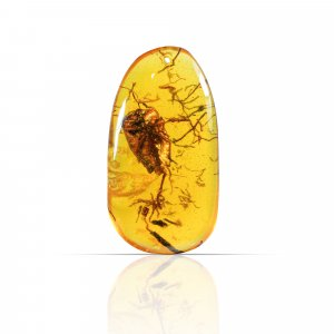 Insect Synthetic Amber 69x37mm Uneven Tumble With Drilled Stone 149.60 Cts