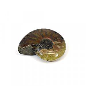 Natural Ammolite 23x18mm Freeform 45.46 Cts Loose Gemstone