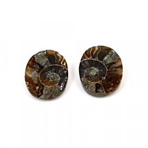 Natural Ammonite Fossil 15x10mm Oval 10.80 Cts 1 Pair Loose Gemstone