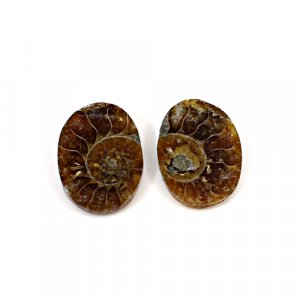 Natural Ammonite Fossil 15x9mm Oval 20.14 Cts 1 Pair Loose Gemstone