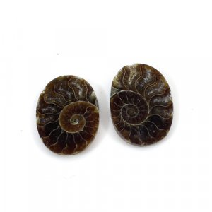 Natural Ammonite Fossil 17x11mm Oval 10.90 Cts 1 Pair Loose Gemstone