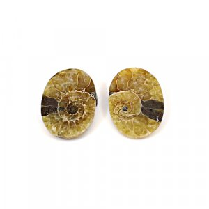 Natural Ammonite Fossil 19x13mm Oval 14.65 Cts 1 Pair Loose Gemstone