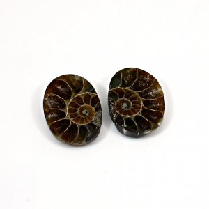 Natural Ammonite Fossil 19x14mm Oval 10 Cts 1 Pair Loose Gemstone