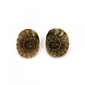 Natural Ammonite Fossil 20x14mm Oval 17.10 Cts 1 Pair Loose Gemstone