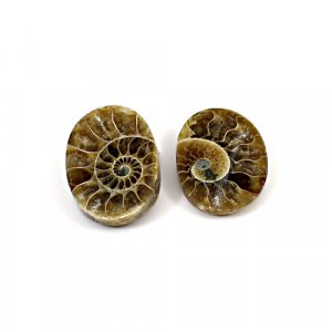 Natural Ammonite Fossil 20x14mm Oval 24 Cts 1 Pair Loose Gemstone