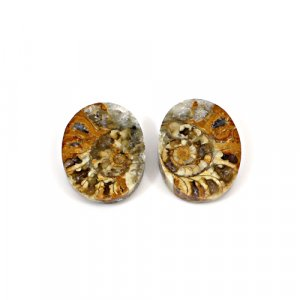 Natural Ammonite Fossil 20x15mm Oval 12.75 Cts 1 Pair Loose Gemstone