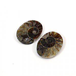 Natural Ammonite Fossil 20x15mm Oval 7.65 Cts 1 Pair Loose Gemstone