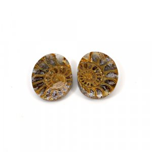 Natural Ammonite Fossil 20x16mm Oval 10.40 Cts 1 Pair Loose Gemstone