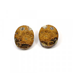 Natural Ammonite Fossil 20x16mm Oval 13.10 Cts 1 Pair Loose Gemstone