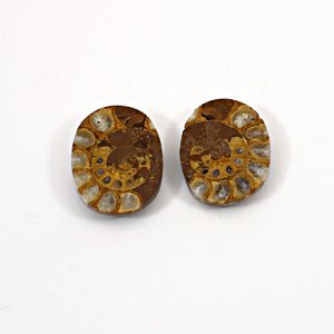 Natural Ammonite Fossil 21x16mm Oval 11.40 Cts 1 Pair Loose Gemstone