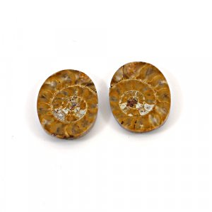 Natural Ammonite Fossil 21x16mm Oval 13.65 Cts 1 Pair Loose Gemstone