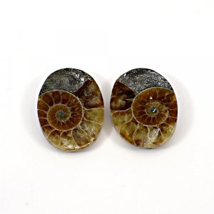 Natural Ammonite Fossil 22x16mm Oval 27.50 Cts 1 Pair Loose Gemstone