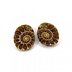 Natural Ammonite Fossil 22x16mm Oval 37.16 Cts 1 Pair Loose Gemstone