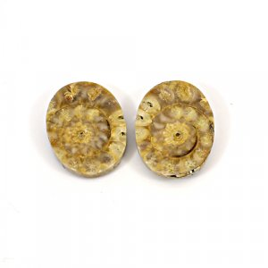 Natural Ammonite Fossil 22x17mm Oval 30.90 Cts 1 Pair Loose Gemstone