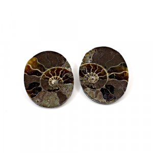 Natural Ammonite Fossil 25x19mm Oval 15.90 Cts 1 Pair Loose Gemstone
