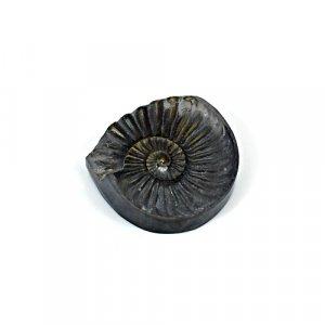 Natural Ammonite Fossils Gold Iron Pyrite 27x26mm 29.95 Cts Freeform Loose Gemstone