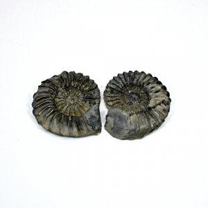 Natural Ammonite Fossils Gold Iron Pyrite 42x35mm 115.65 Cts Freeform Loose Gemstone