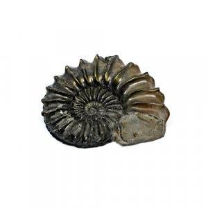 Natural Ammonite Fossils Gold Iron Pyrite 43x34mm 78.35 Cts Freeform Loose Gemstone