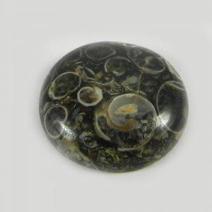 Natural Turtella Jasper 18mm Round Cabochon 13.0 Cts