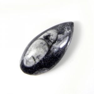 Orthoceras Fossil 31x15mm Pear Cabochon 25.55 Cts