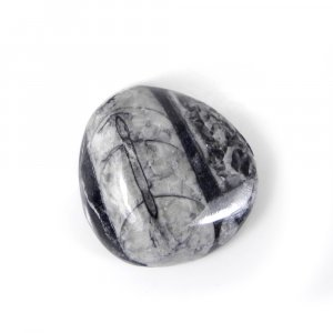 Orthoceras Fossil 37X34mm Fancy Cabochon 99.25 Cts