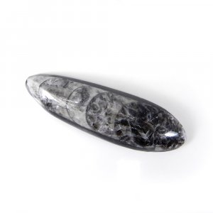 Orthoceras Fossil 61X19mm Pear Cabochon 94.85 Cts