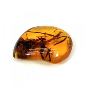 Scorpio Amber Uneven Tumble 50x38mm 89.75 Cts Drilled Gemstone For Pendant Making