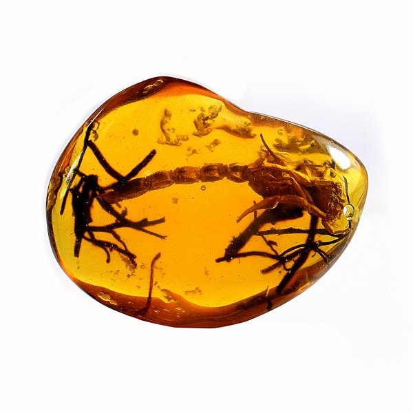 Scorpio Amber Uneven Tumble 51x37MM 88.00 Cts Drilled Gemstone For Pendant Making