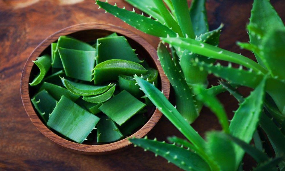 Aloevera Health Benefits