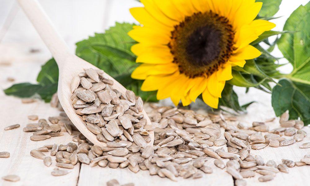 Sunflower seeds Nutrition & Uses