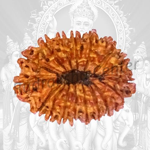 17 Mukhi Nepalese Rudraksha