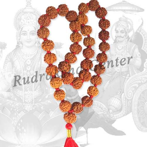 Seven (7) Mukhi Rudraksha Mala