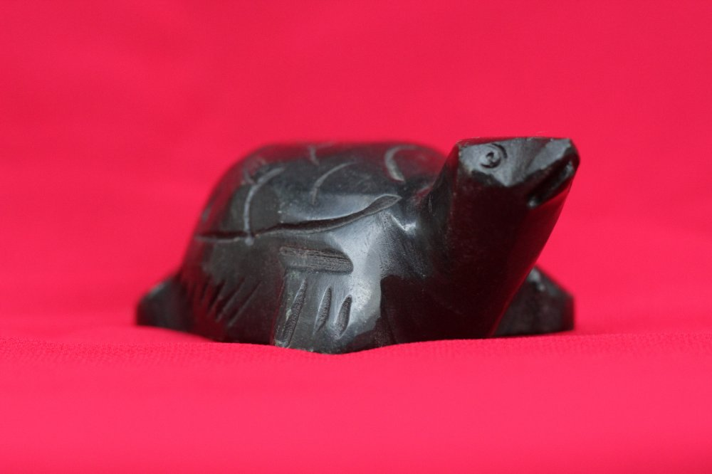 Elegant black turtle